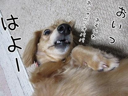 kinako6066.jpg