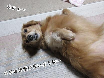 kinako6172.jpg