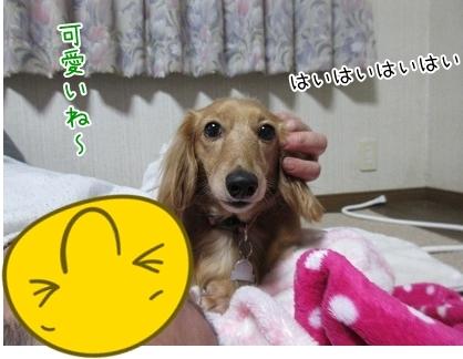 kinako6176.jpg