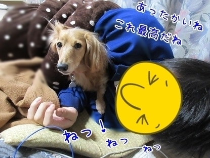 kinako6212.jpg