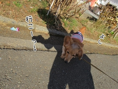 kinako6260.jpg