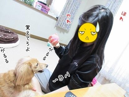 kinako6299.jpg