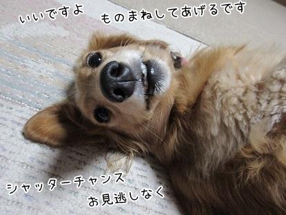 kinako6326.jpg