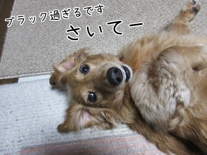 kinako6373.jpg