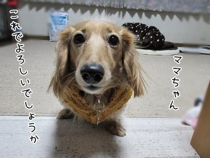 kinako6393.jpg