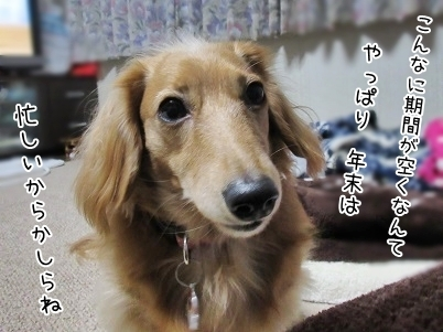 kinako6400.jpg