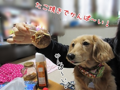 kinako6441.jpg