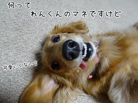 kinako6547.jpg