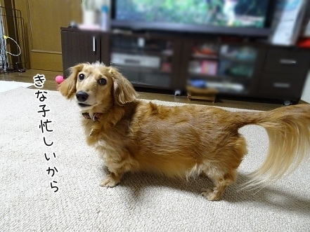 kinako6550.jpg