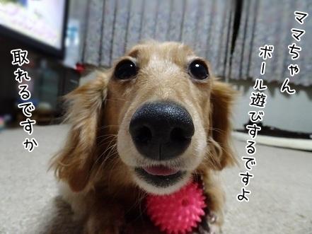 kinako6561.jpg