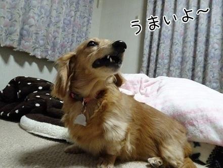 kinako6573.jpg