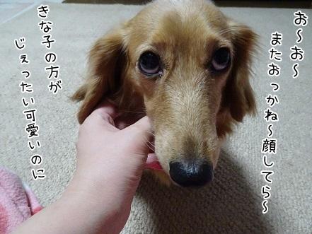 kinako6594.jpg