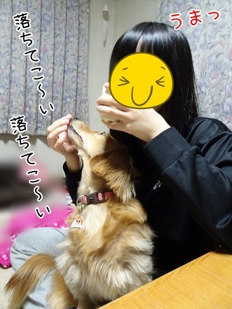 kinako6599.jpg