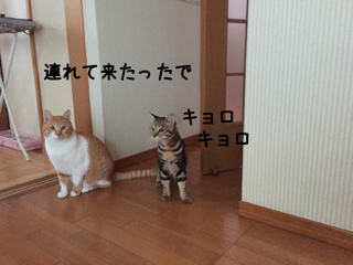 20161202092223c35.png