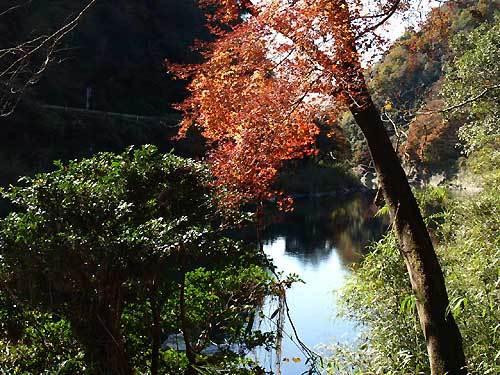 haisenkawazoi.jpg