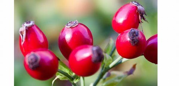rose-hip-493784_640 (1)