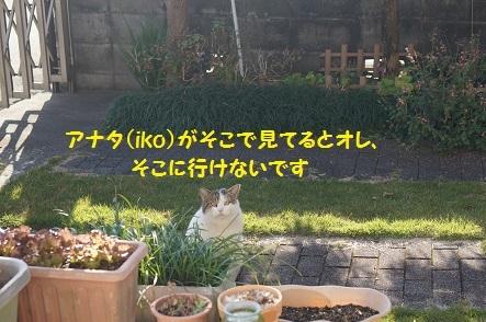 20161229120059c6f.jpg
