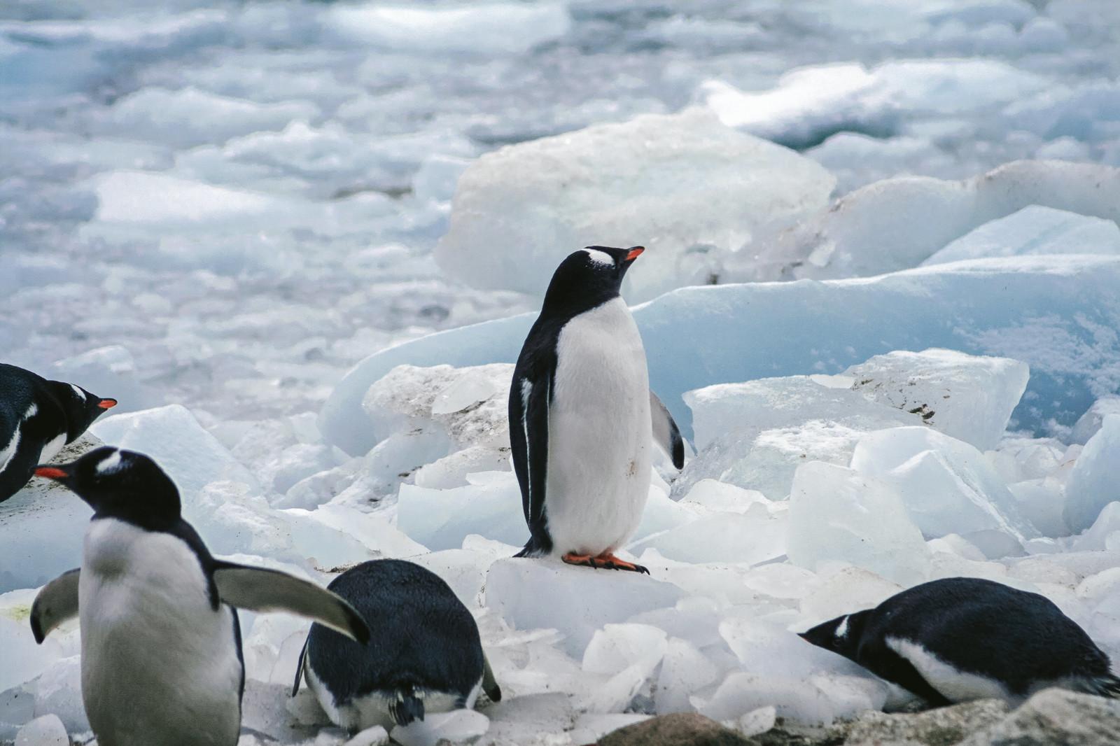 将来が不安なペンギン※