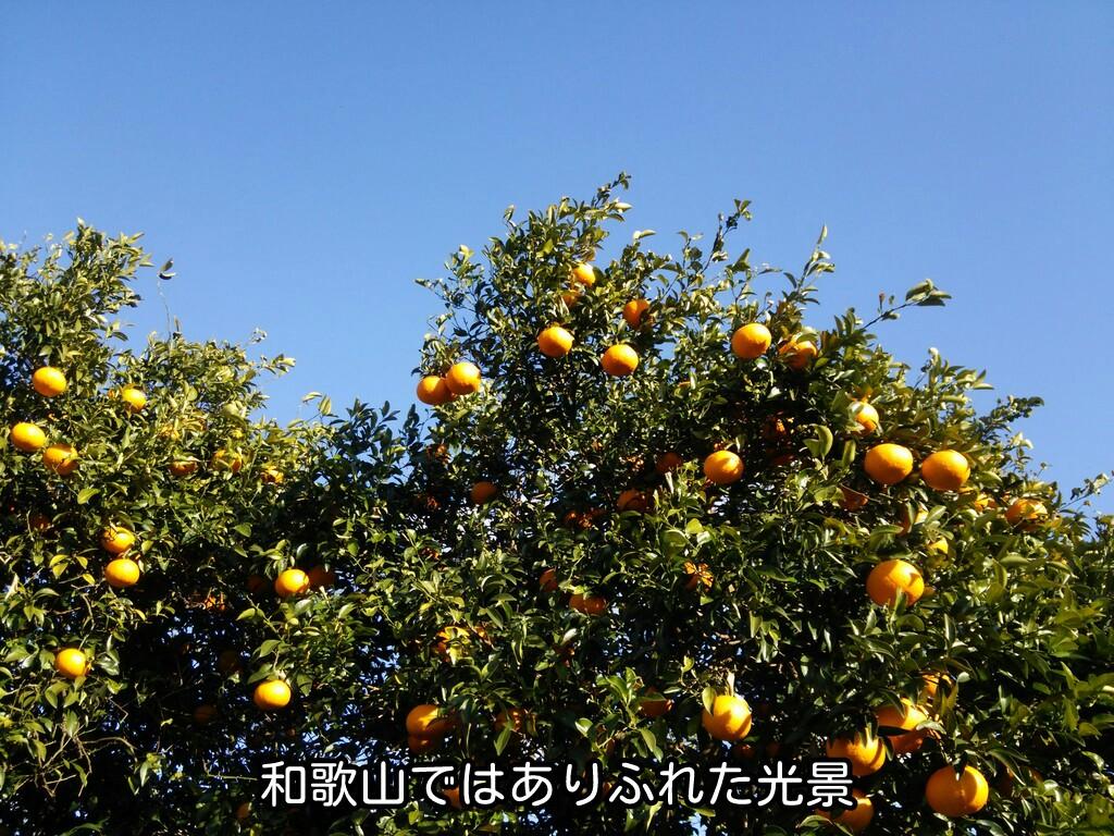 和歌山ではありふれた光景