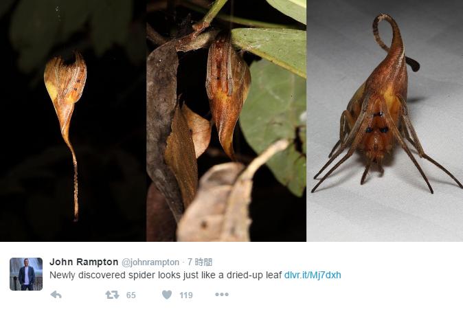 まるでエイリアンのよう「枯れ葉に擬態」する専門家も困惑した新種の「クモ」を発見か?中国雲南省