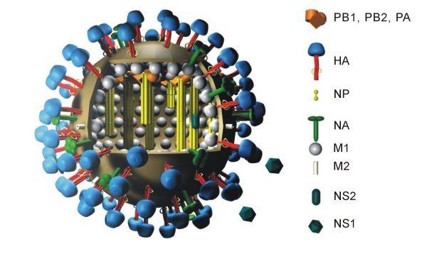 【A香港型】インフルエンザが4倍の勢いで感染拡大中…インフルにかかった体験談も教えてくれ