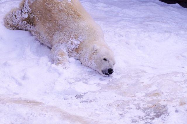 【NOAA】北極圏で記録的な高温、薄い海氷増える…世界の山岳氷河の融解は温暖化が原因