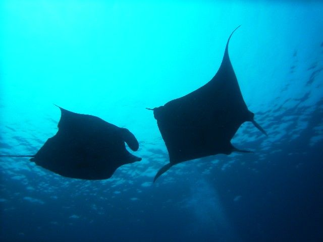 北海道・函館の沖に「マンタやマンボウ」など巨大熱帯魚が次々と揚がる!イカやサケは例年にない不漁…異変が続く北の海に何かが起こっている