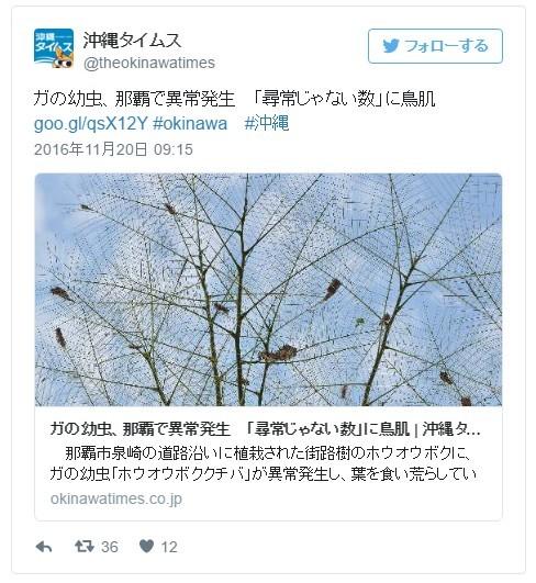 沖縄・那覇で「ガの幼虫」が大量発生…「尋常じゃない数」に鳥肌