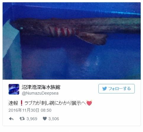 【前触れ】名古屋で「地鳴り」がするとのツイートが相次ぐ…静岡県沼津港では深海魚の「ラブカ」が網にかかる!