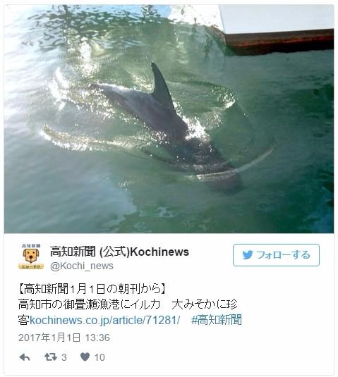 【年末年始】高知県の御畳瀬漁港と小筑紫港に「イルカ」が出現…地元70年漁師「堤防内では初めて見た」