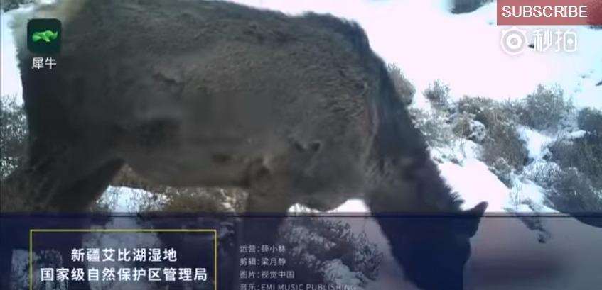 【UMA】中国・ウイグル自治区で「ウマとシカ」の間を取ったような謎の生物が見つかる!