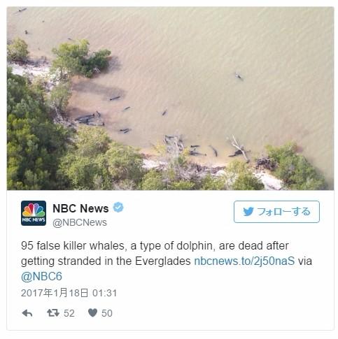 【オキゴンドウ】アメリカ・フロリダ州の浜辺にイルカ「約100頭」が打ち上げられる!原因は不明