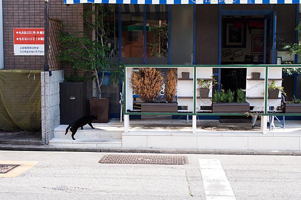 筒井町黒猫