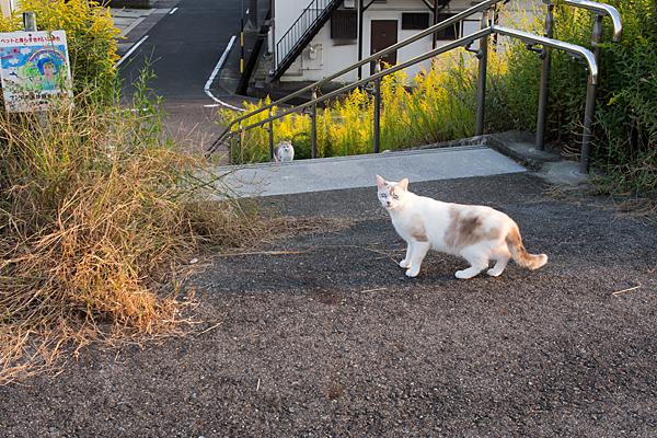 西日を浴びる猫
