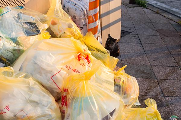 ゴミ袋と黒猫