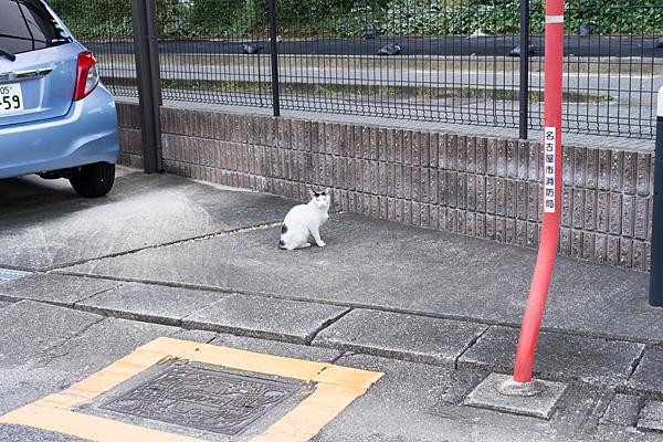 白に斑ネコ