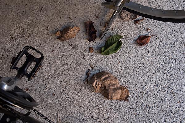 自転車置き場と枯れ葉