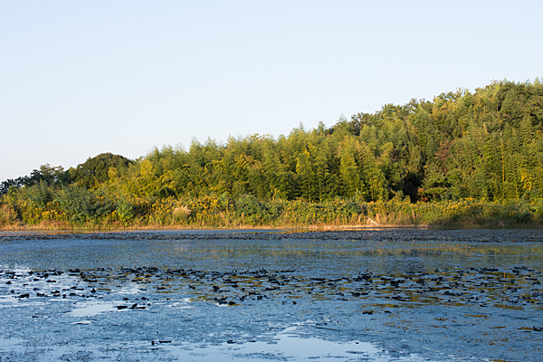 塚ノ杁池風景