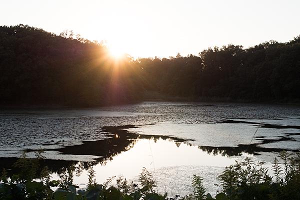 塚ノ杁池カイツブリ