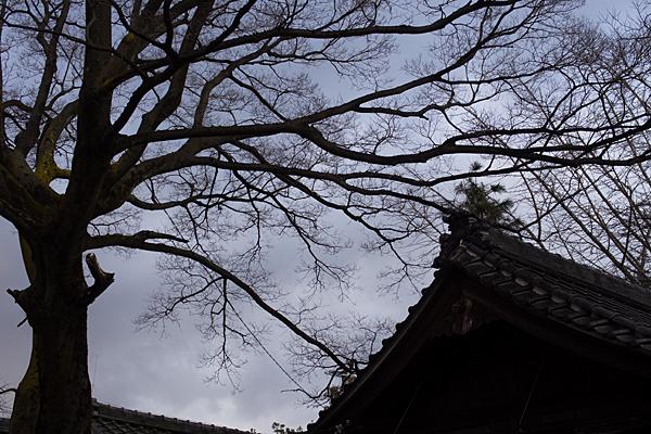 深島神社社殿と木のシルエット