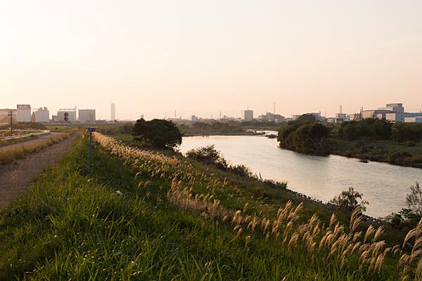 庄内川夕景とススキ