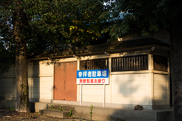 矢田六所神社境内の猫