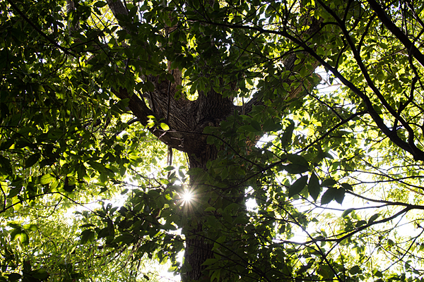 島田城の木