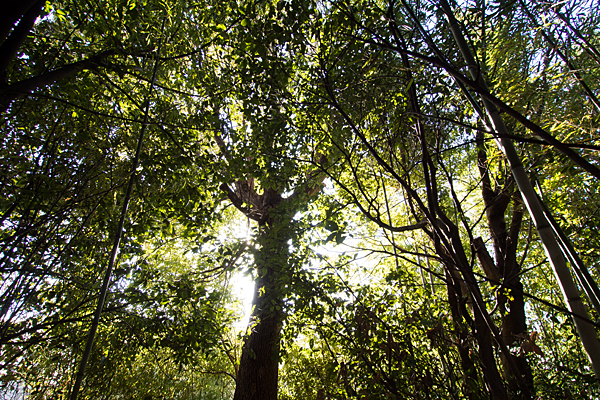 島田城跡の雑木林