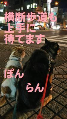 DSC_0993_convert_20161228110810.jpg
