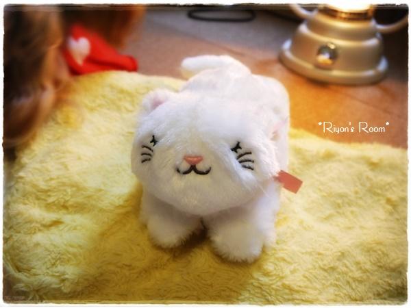 白猫ちゃん①