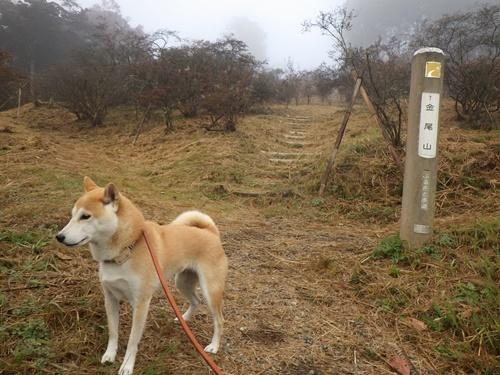 金尾山つつじ公園6