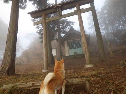 金尾山つつじ公園7