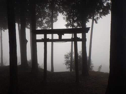 金尾山つつじ公園14