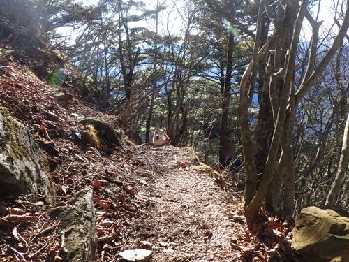 滝子山22
